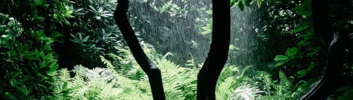A photo of rain through trees.